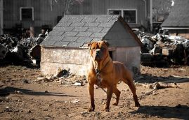 work.2309832.2.flat,550x550,075,f.junk-yard-dog