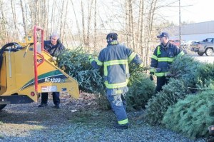 tol-tree-chipping