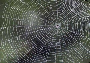 Interwebs 1